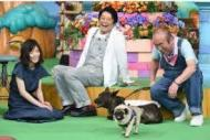 TV番組『天才!志村どうぶつ園』